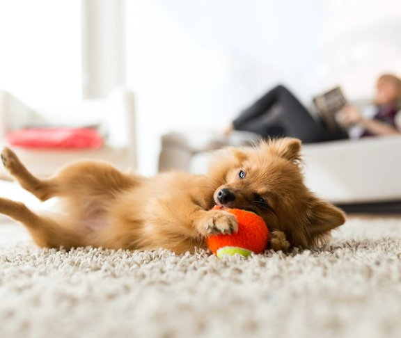5 Ways to Puppy Proof Your Apartment